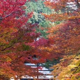 Autumn archway - Kyoto