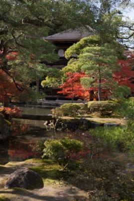 A splash of Autumn red - Kyoto.
