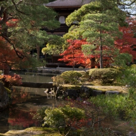 A splash of Autumn red - Kyoto.