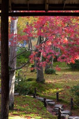 Japanese garden in Autumn - Kyoto.