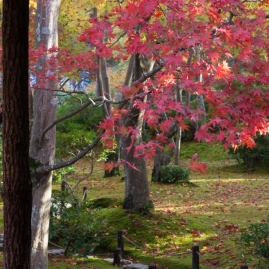Japanese garden in Autumn - Kyoto.