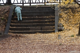 Autumn clean up - Kyoto.