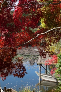 Ryoanji - red maple & still water