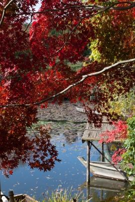 Ryoanji - red maple & still water