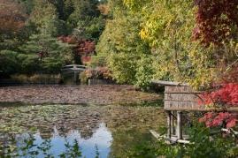 Ryoanji - Kyoyochi Pond 1