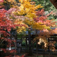 Ryoanji - courtyard colour
