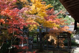 Ryoanji - courtyard colour