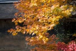 Ryoanji - autumn blaze