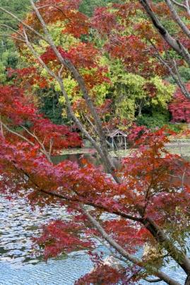 Ryoanji - Kyoyochi Pond 2