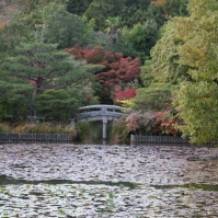 Ryoanji - Kyoyochi water lilies and bridge