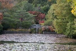 Ryoanji - Kyoyochi water lilies and bridge