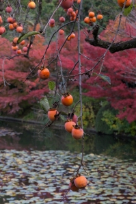 Ryoanji - autumn fruit