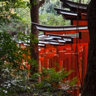 Fushimi Inari - the track down (pic 1) (IMG_7858)