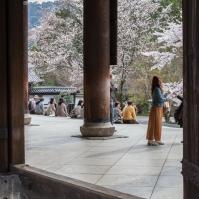 Sanmon Gate - hanami pic 1