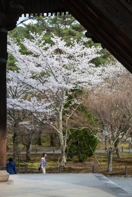 Sanmon Gate - hanami pic 2