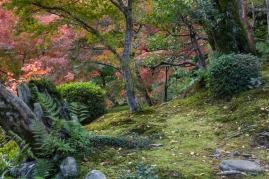 Tenryu-ji Temple - garden scene