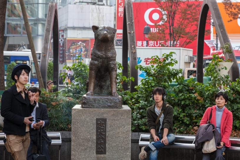 Shibuya Crossing - Hachiko