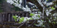 Nikko - Rebirth in an old place