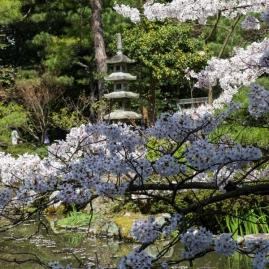 Cherry Blossom - Kyoto - Heian Shrine pic 6