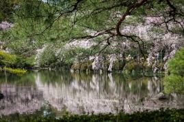 Cherry Blossom - Kyoto - Heian Shrine pic 8
