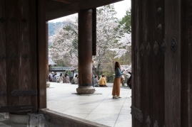 Hanami at Sanmon Gate