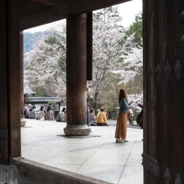 Hanami at Sanmon Gate