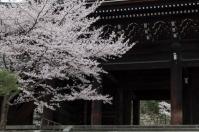 Inside and Outside Sakura