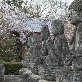 Sakura at Renge-ji