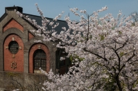 Sakura and old industrial building
