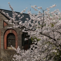 Sakura and old industrial building