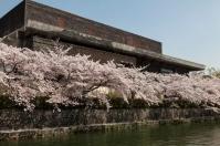 Sakura lining canal near Exhibition Hall