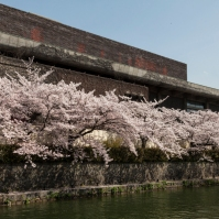 Sakura lining canal near Exhibition Hall