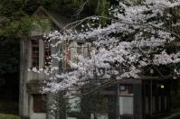 Sakura and double storey house