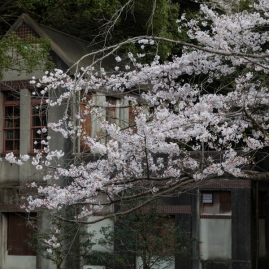 Sakura and double storey house