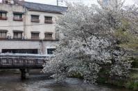 Sakura and old apartment block