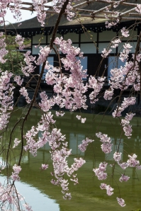 Sakura at Heian Shrine