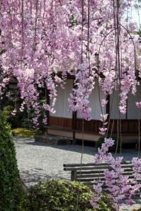 Garden in Higashiyama