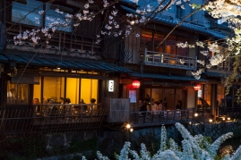 Upscale Teahouse and Sakura