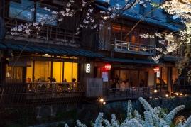 Upscale Teahouse and Sakura
