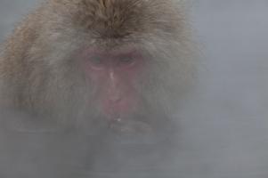 Peering through the mist