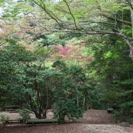 Mt Misen walk - pic 3