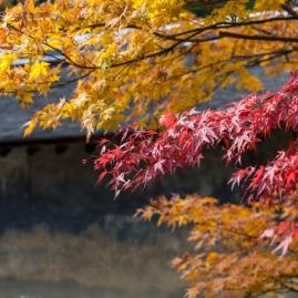 Ryoanji - pic 2