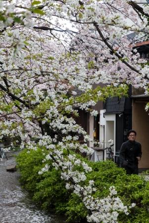 Sakura in Kyoto - pic 1