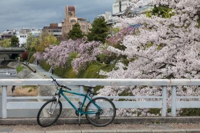 Sakura in Kyoto - pic 2