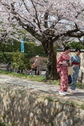 Sakura in Kyoto - pic 6