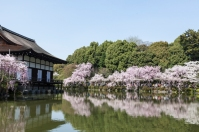 Sakura in Kyoto - pic 9