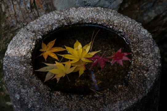 Autumn leaves in stone basin