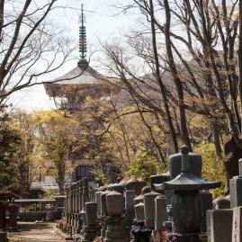 59.14 Zenkoji Graveyard (IMG_8131)