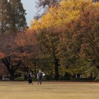 61-06-shinjuku-goen-pic-2-img_0822
