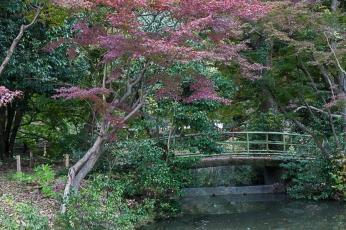 Kyoto Garden - pic 3